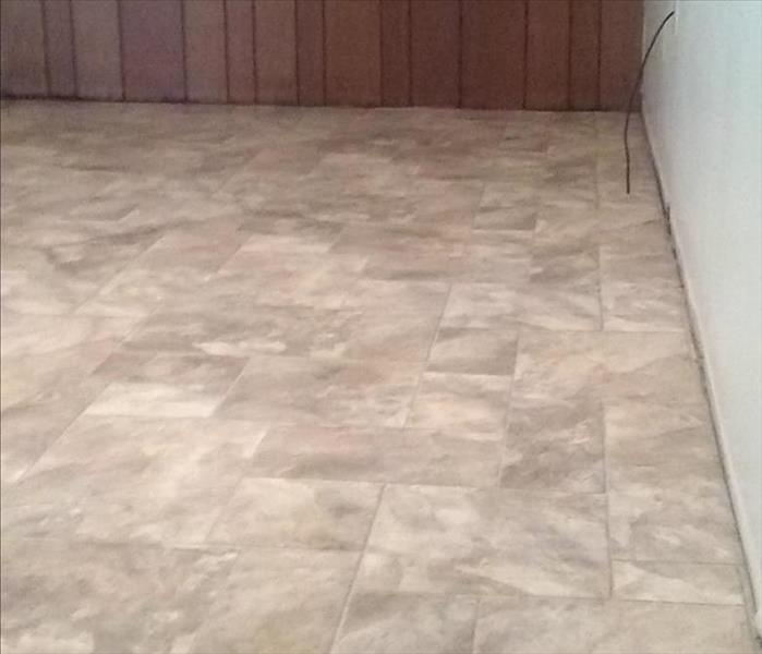 Basement floor after animal damage clean up